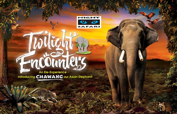 Night Safari - Twilight Encounters